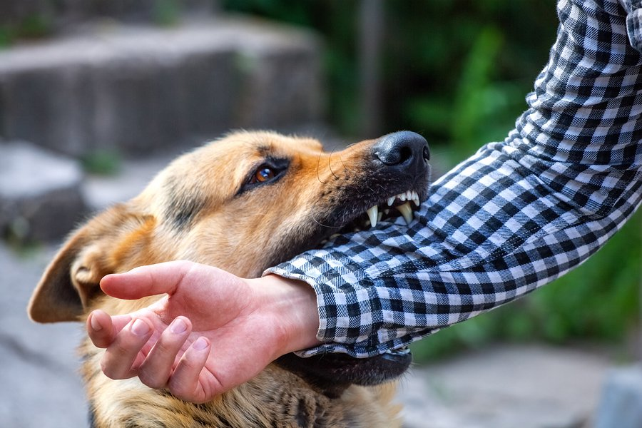 What happens to dogs that bite you? Attorney in Houston, TX